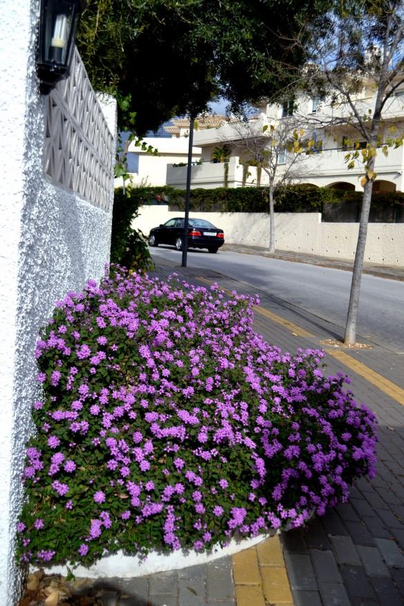 Fina blommor hos värdparet