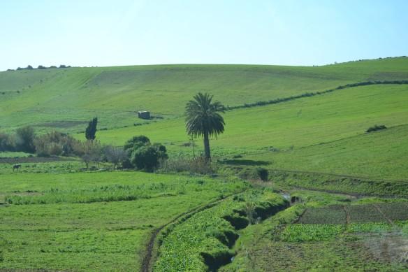 Gröna sluttningar, men inga odlingar