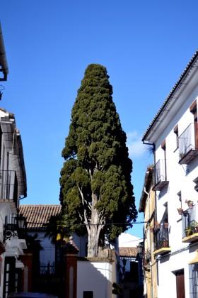 Ett vackert träd