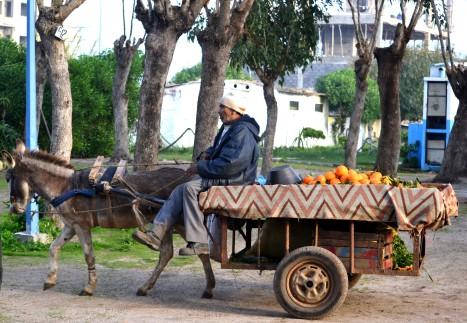 Åsefarbrorn med apelsiner