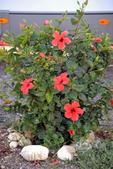 Blommor som avgränsar platserna