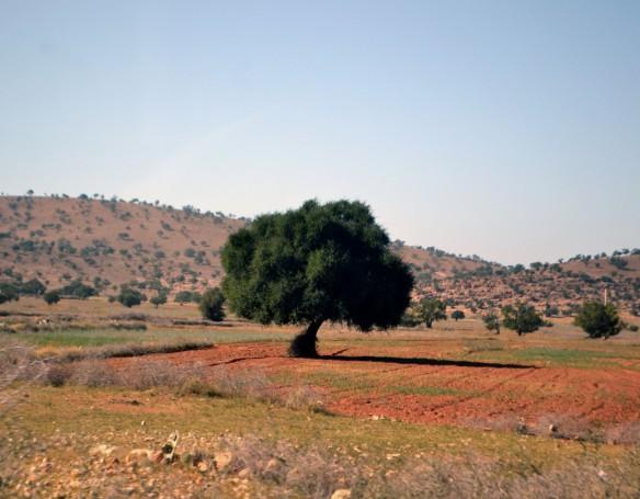 Det ensamma trädet