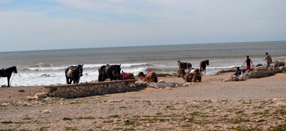 Hästar på stranden