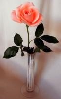 Rosen som jag fick på Alla hjärtans dag......