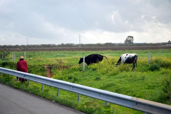 Kor utmed motorvägen.....