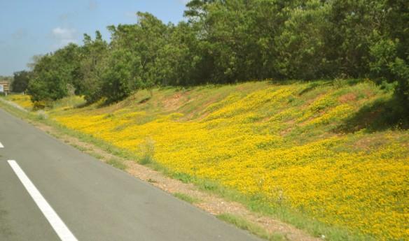 Blommigt efter vägen