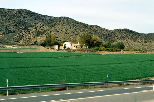 Gröna åkrar
