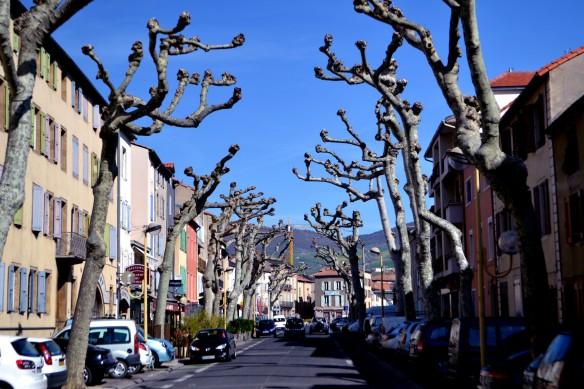 En allé med knotiga träd