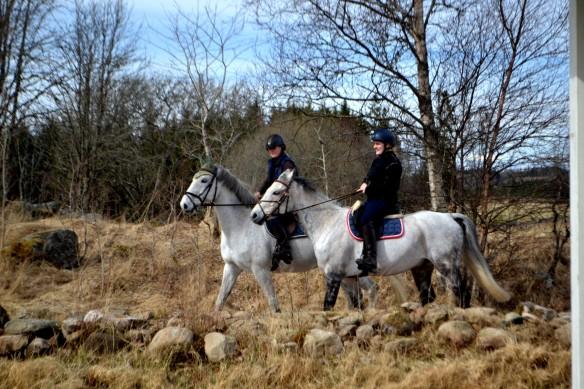 Grannar på häst