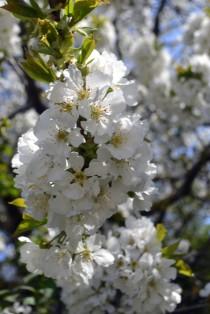 Underbara blommor