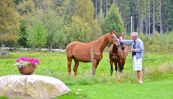 Hästar & TW