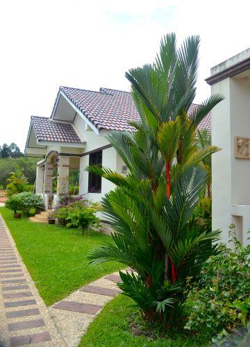 Hus och palm