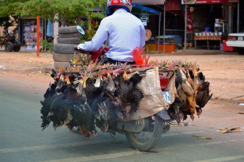 Hönor på cykel
