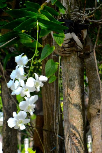 Orkidee2