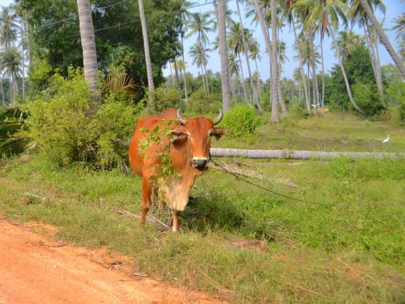 Ko vid vägen