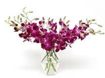 Orkide3