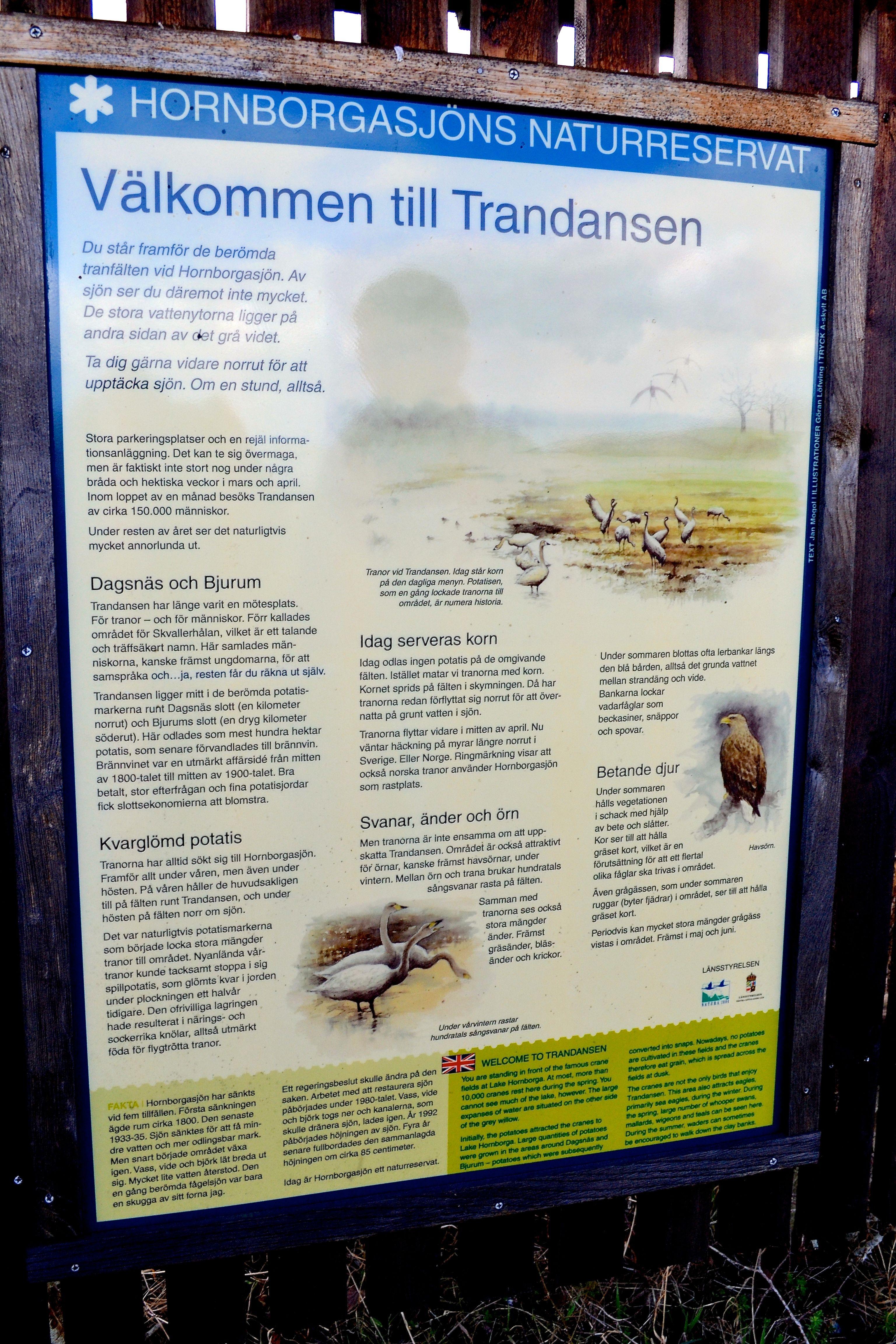 Ls om Hornborgasjn, en av de finaste fgelsjarna i Europa