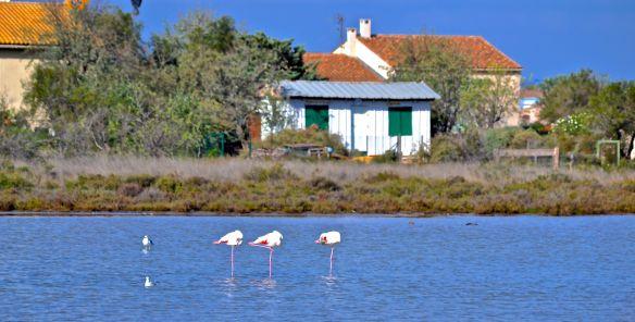 3 Flamingos