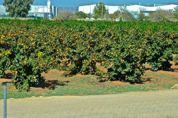 Apelsinlunden