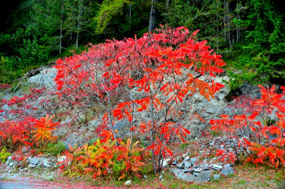 Brinnande buske