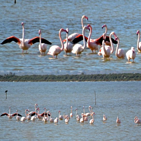 collage Flamingos