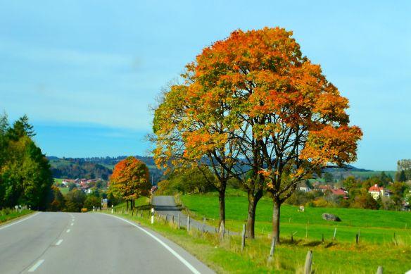 Hösträd efter vägen