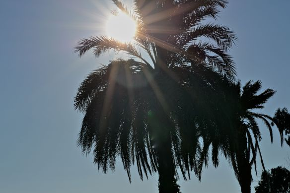 Sol i palm