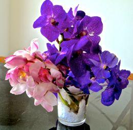 Orkide på bord