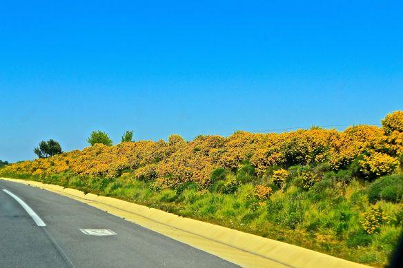 Gula blommor efter vägen