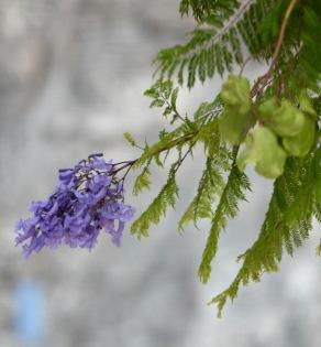 Blomma med gren