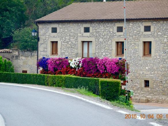 Blommor på mur